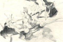 Iris_Zeichnung_final_v2